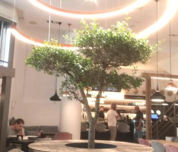 Carnegie Resto Bar / Lounge Cafe