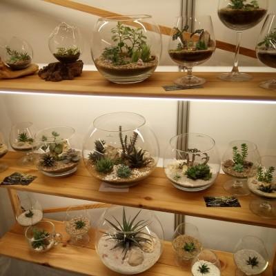 Выставка - растения